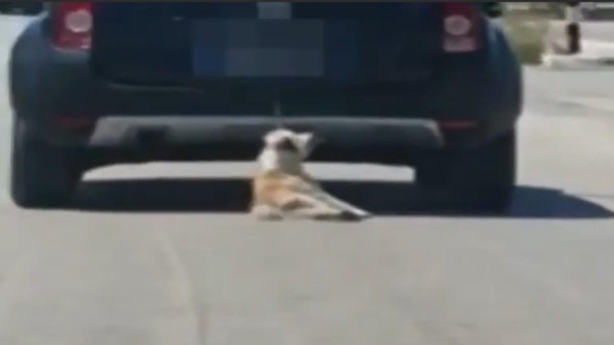 cane trascinato
