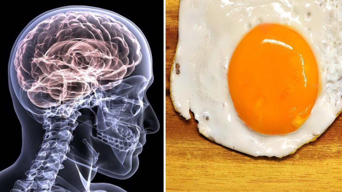 un uovo al giorno