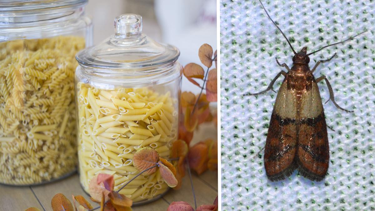 farfalline del cibo