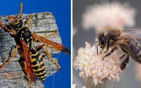 api e vespe