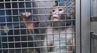 sperimentaizone animale