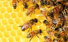 protezione delle api
